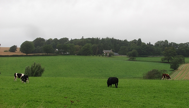 Cattle, Bassendean