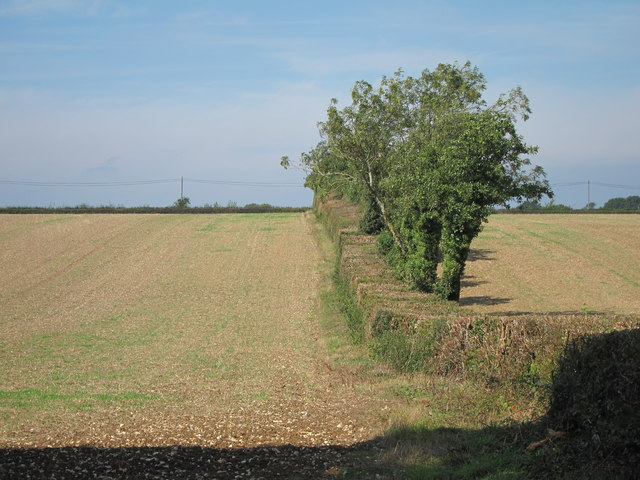 Fields and hedge row