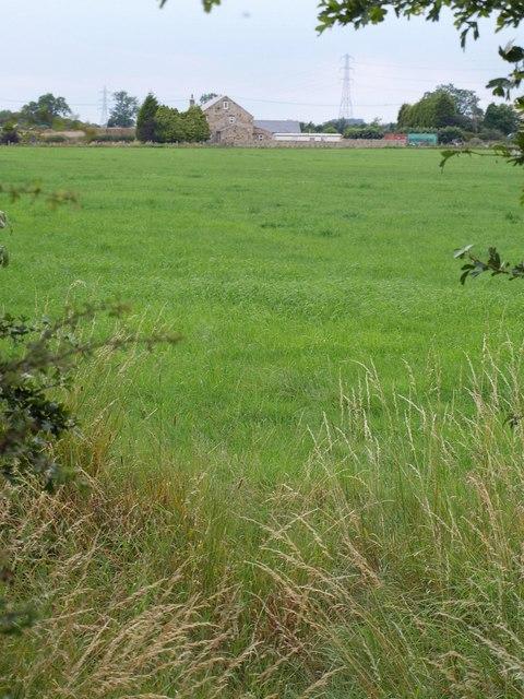 Field, Park House Farm
