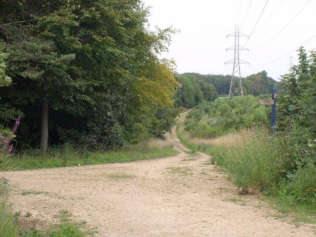 Tracks, Jenny Sober Plantation