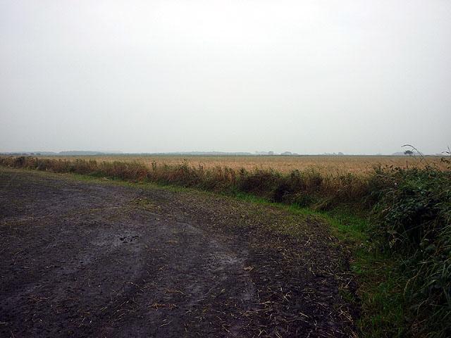 Fields on Cockerham Moss