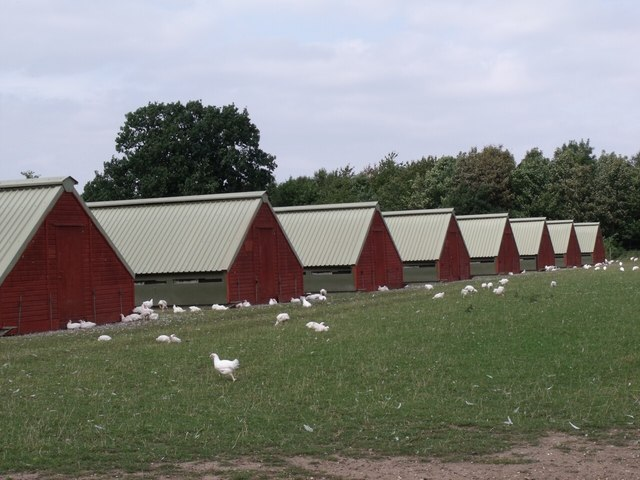 Chicken Farm off the A46