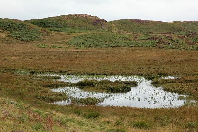 Small unnamed tarn, Blawith Fells
