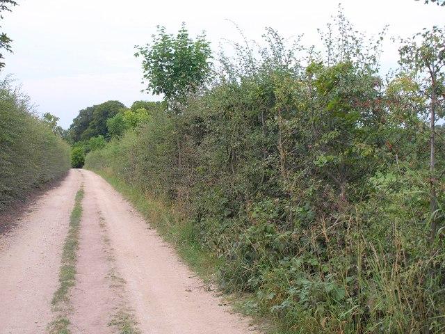 Track to Wellhill Farm