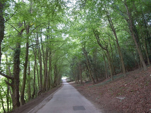 Drive through Biggin Wood