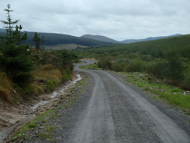 Forest road leading towards the Fleet Valley