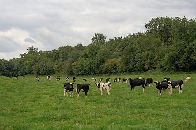 Field near Burntroots Plantation