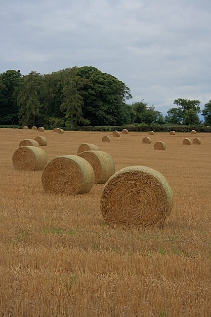 Bales, near Friar's Hurst
