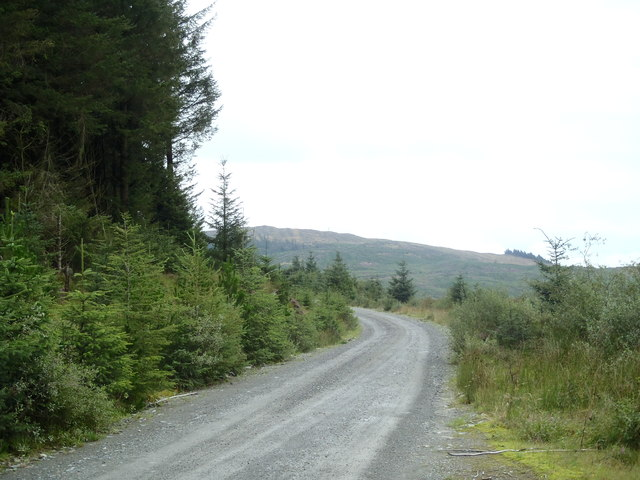 Forest Track below the Rig of Burnfoot
