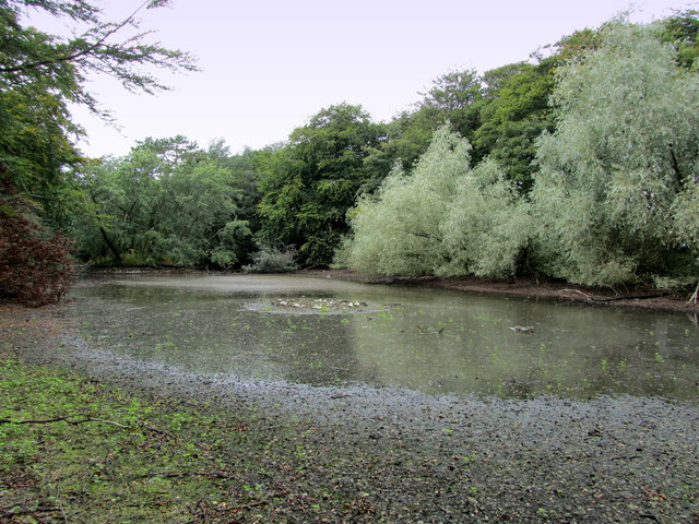 Pond by Fluke Hall Lane