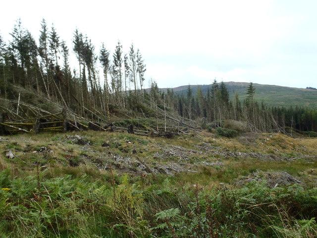 Wind blown timber above the Burnfoot Burn