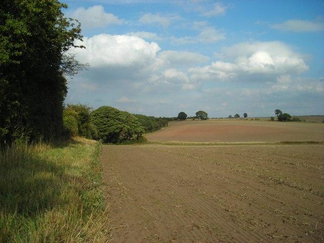 Hedgerows, footpaths, fields