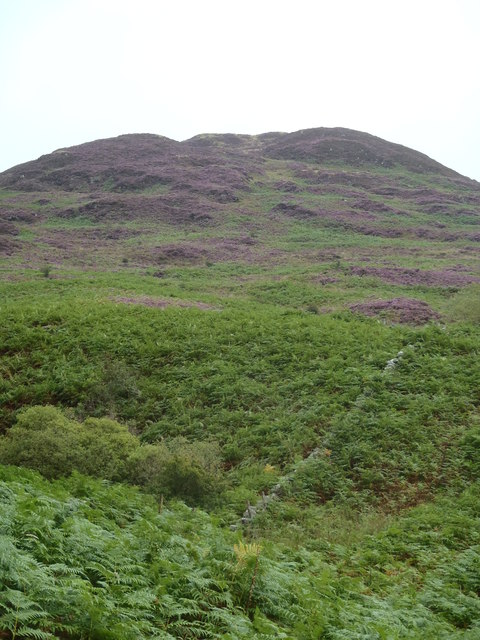 Heather clad slopes of Corbie Craig
