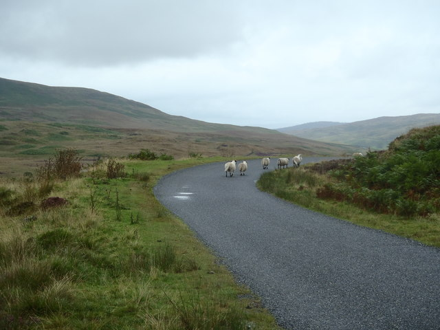 Sheep on the Laurieston Road
