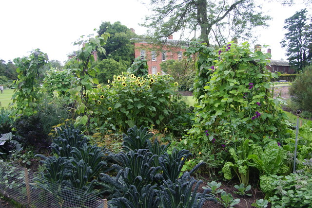 Edible garden at Dunham Massey