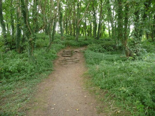 Path in woodland on the approach to Din Lligwy