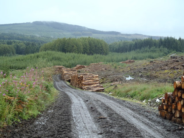 Forest Harvest in the Galloway Forest Park