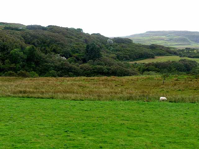 Woodland below Treshnish