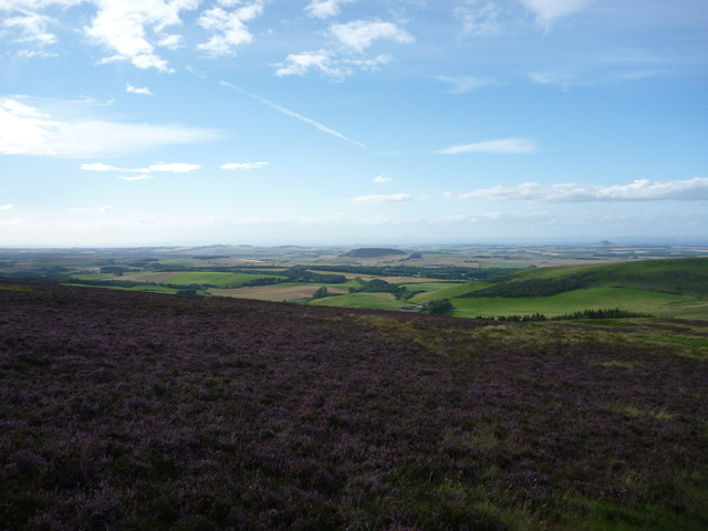 East Lothian Landscape : Up Amongst The Heather On Deuchrie Edge