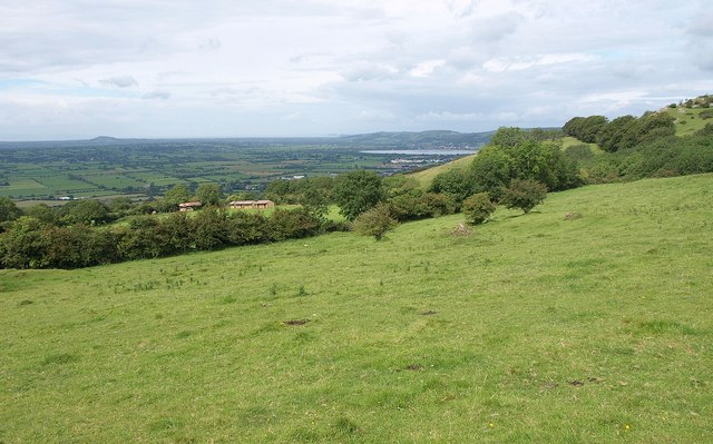 Cattle pasture on the Mendips