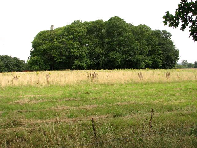 Chestnut Wood, Castle Rising