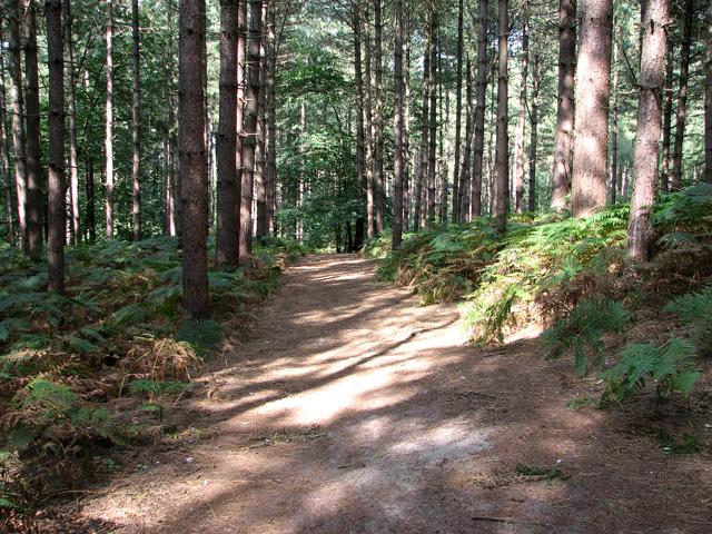 Path in Jocelyn's Wood, Dersingham