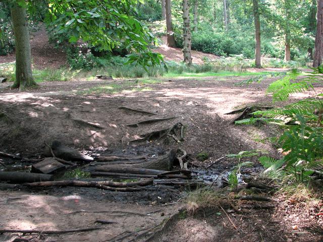 Small stream on footpath in Jocelyn's Wood, Dersingham