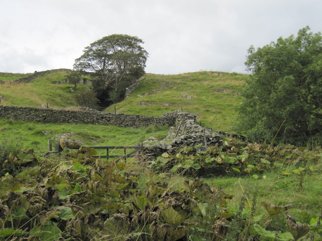 Walls and fellside north of Goat Lane