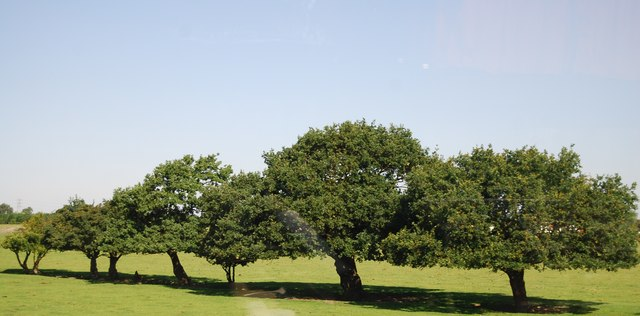 Trees, Belhus Park