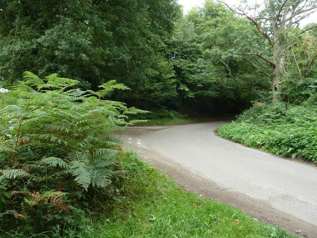 Sharp bend on Iping Lane