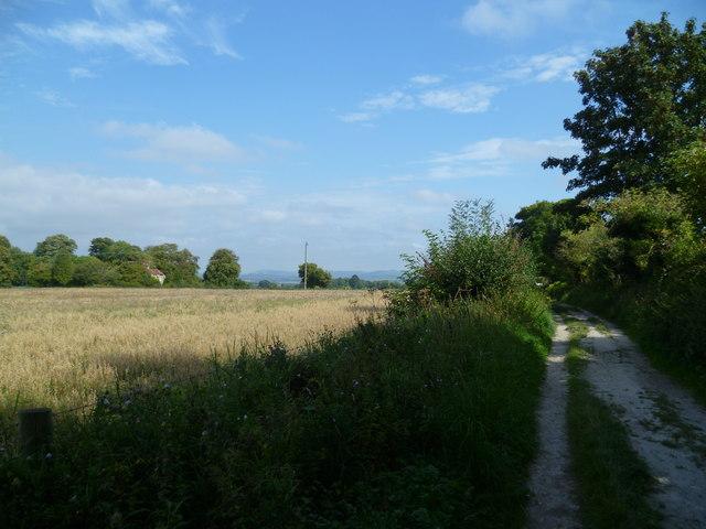 Downland bridleway looking east towards Great Barn Farm