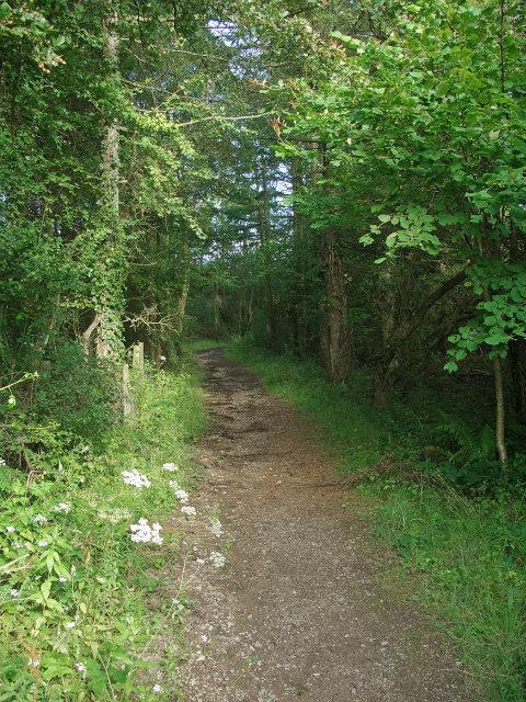 Footpath, Cwm Ffos