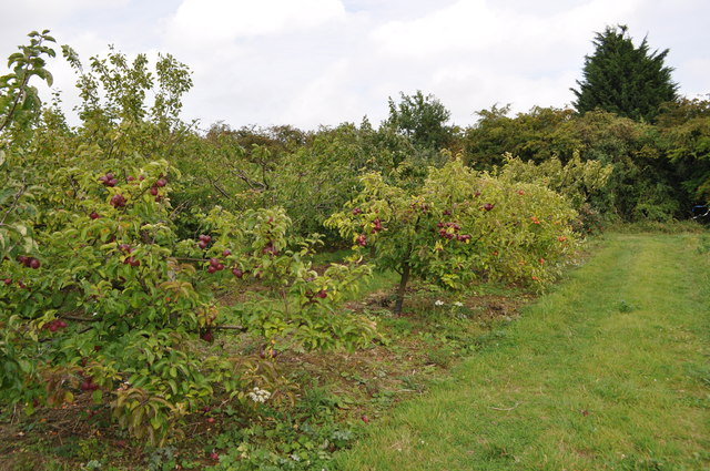 Hillfield Orchard