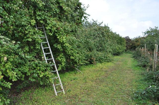 Hillfield Orchard