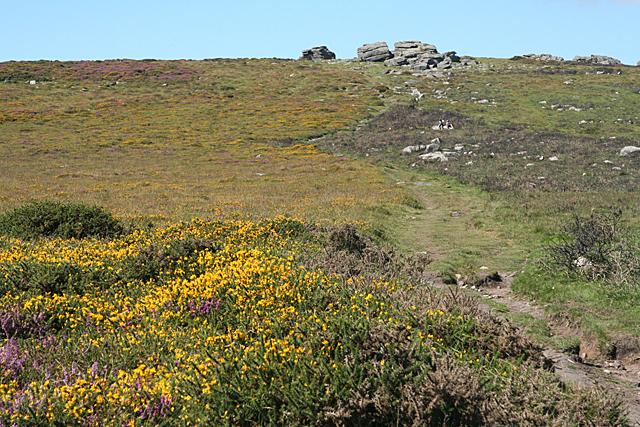 Widecombe in the Moor: towards Top Tor