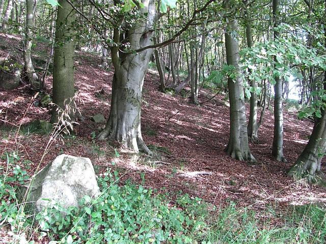 Binn Wood