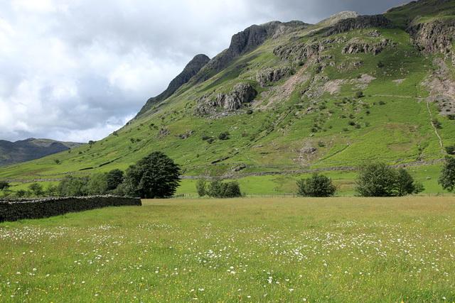 Meadow in Great Langdale
