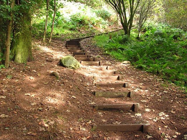 Steps, Benarty Wood