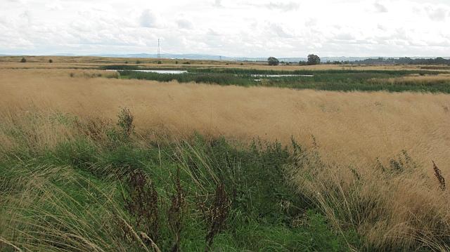 Wetland near Forthbank