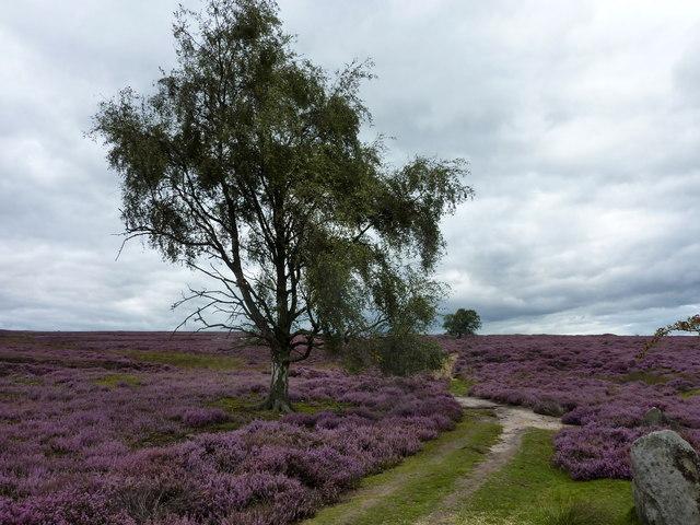 Spaunton Moor, North Yorkshire
