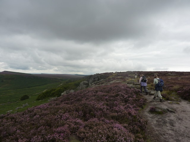 Dull day, bright heather