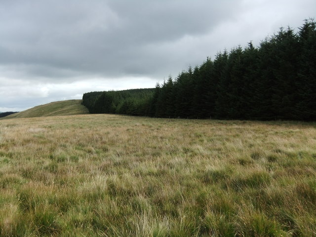Edge of the wood, Cockley Moor