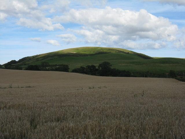 Barley near Newmains