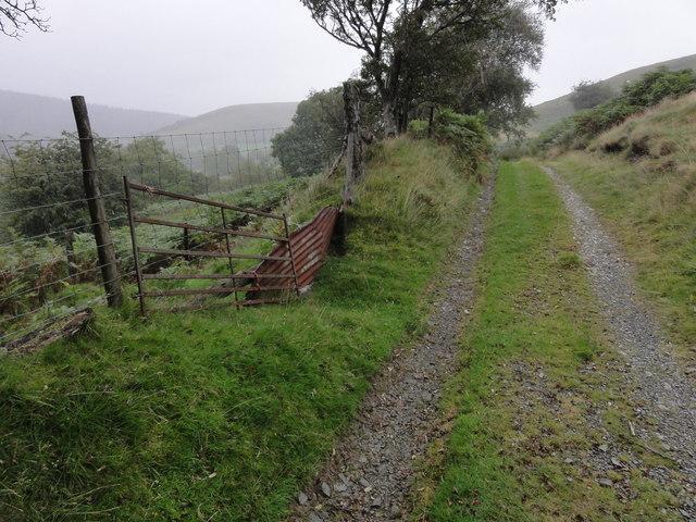 A track in the rain