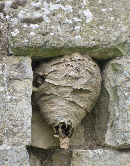 Wasps' nest, Wharram Percy