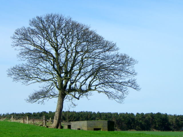 Pillbox near Broomhill