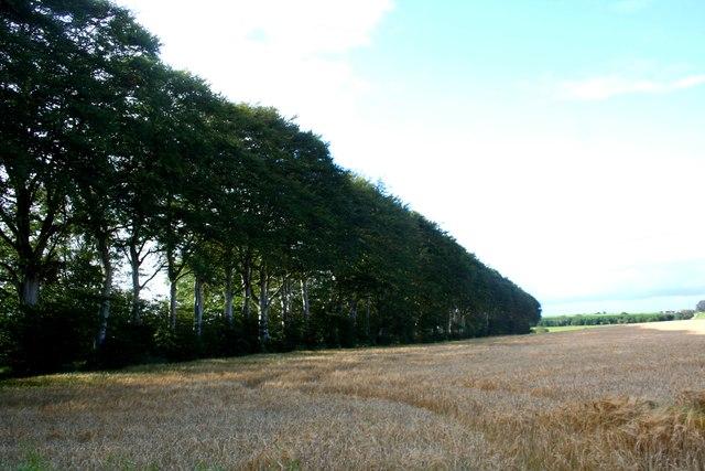Middlemuir Treebelt