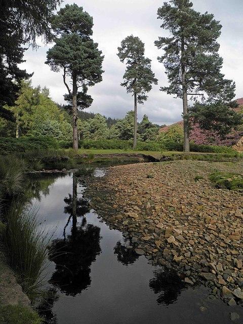 3 Pines alongside the Little Don River