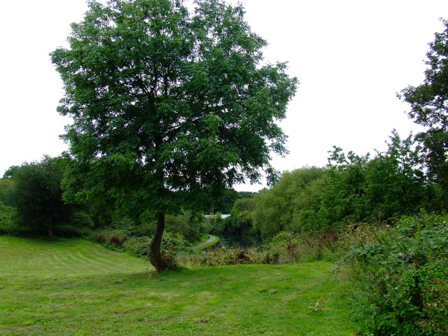 Tree in Elthorne Park