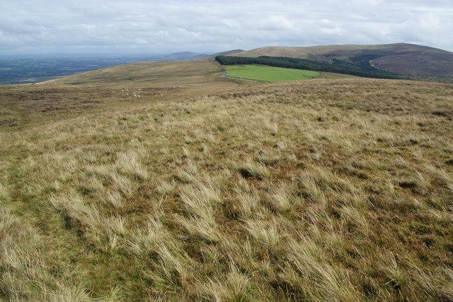 On Foel Eryr looking east